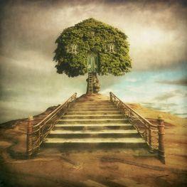 Drzewodom
