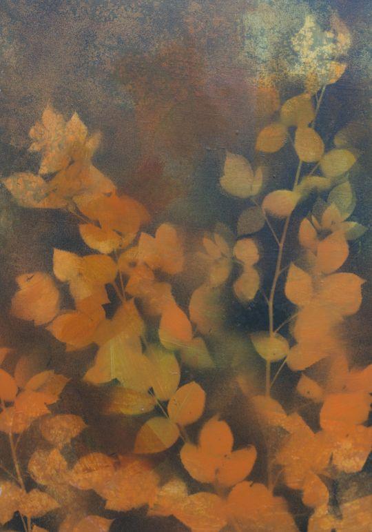 Ewa Kozera - Maliny w pomarańczowym świetle